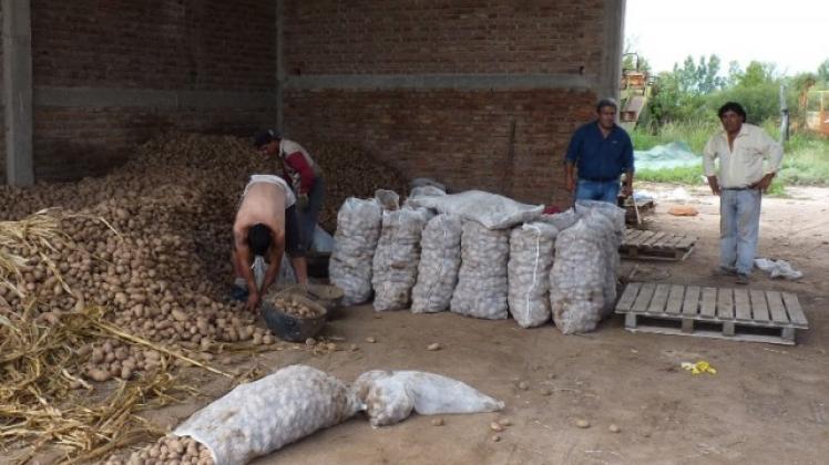 Virus en papa precio de la papa fabrica de bolsa arpillera plastica, rafia, plástica, maiz, cereales, yeso,/