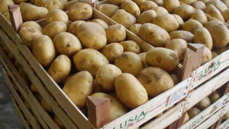 Alemania turingia eccellente raccolta di patate quest for Raccolta patate