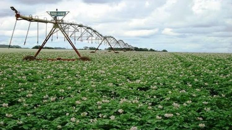 Brasil: Preços Da Batata Elevados Por Mais Uma Semana